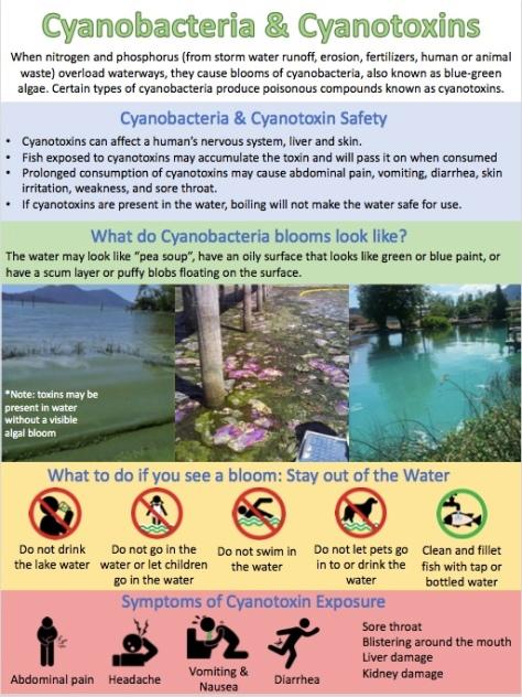 Cyanotoxin Poster Page 2